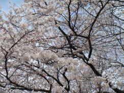 20080409_2_toudai.jpg